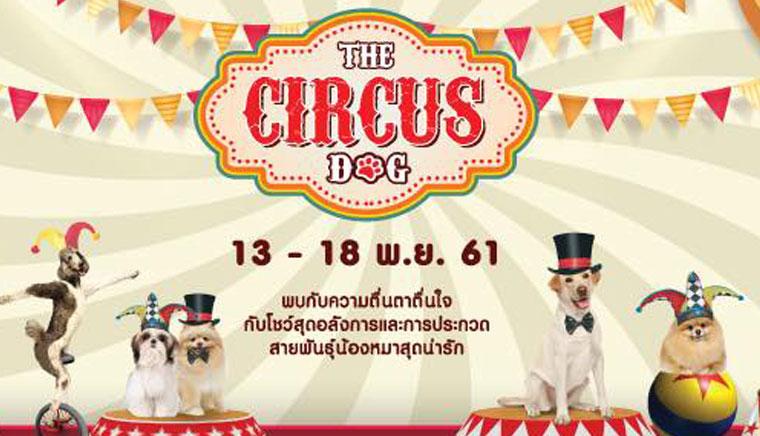 The Circus Dog มหัศจรรย์ละครสัตว์จากกองทัพน้องหมา